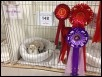 Somerset Cat Club Show